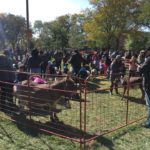 Shabbona Park Dunning Community - Petting Zoo - Pumpkin Patch